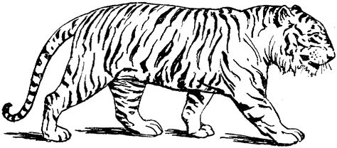 Coloring Tiger free printable tiger coloring pages for