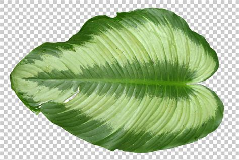 leavestropical  background texture leaf