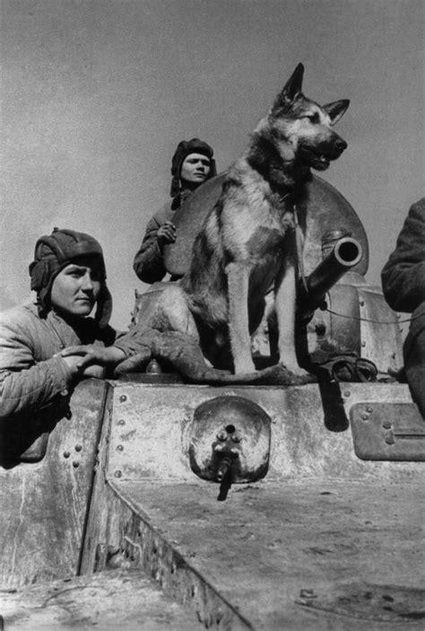 Джульбарс (собака) — Википедия
