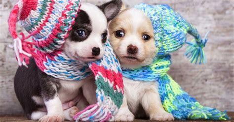 zwei niedliche hunde welpen hd hintergrundbilder