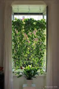 17 best ideas about pothos plant on pinterest kitchen