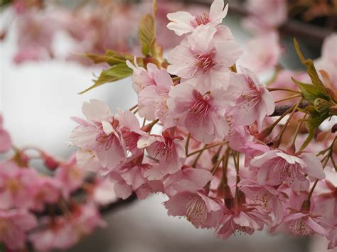 Free Images : branch fruit flower petal food spring