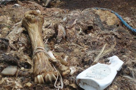 illegal dumping  organic waste travnik bosnia