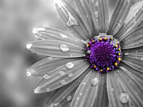 Colorsplash_flower_by_xxmoonsirynxx-d3fw2h6.jpg (640×480