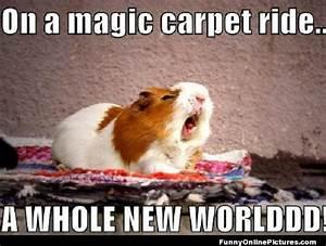 funny hamster memes MEMEs