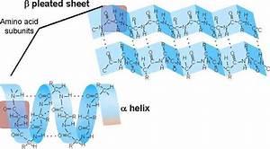 Biology 1140  U0026gt  Scanlon  U0026gt  Flashcards  U0026gt  Bio 1140 Study Guide