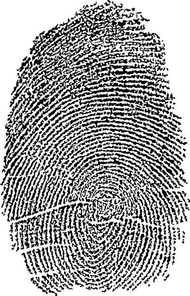 fingerprint vector images  vector