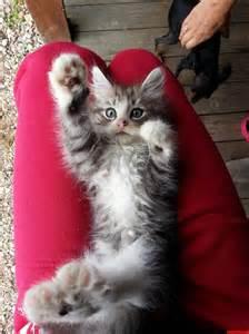 Funny High Five Kitten