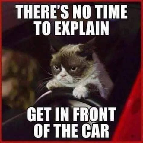 Meme Pictures With Captions - cat saturday 30 photos grumpy cat funny jokes and captions