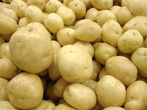pomme de terre en chambre variétés de pommes de terre notre sélection pratique fr