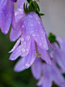 23 best images about Flowers with water drops on Pinterest ...