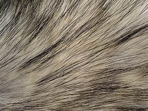 Fur Texture 14 by Fox-N-Wolf on DeviantArt