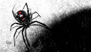 Black Widow Wallpapers Backgrounds