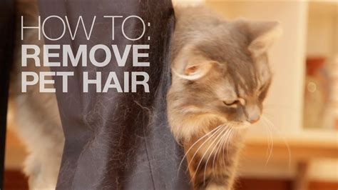 remove pet hair   water youtube