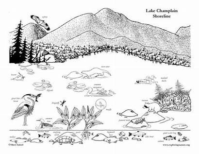 Coloring Shoreline Lake Champlain Mountains Adirondack Printable