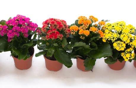 aneka bunga hiasan rumah  ditanam  media pot
