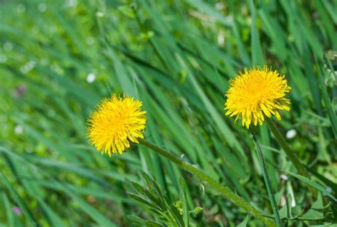 prato  diserbanti chimici contro le erbe infestanti