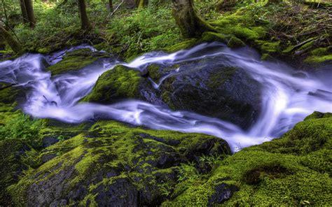 Beautiful Wallpaper Forest Stream Hd Desktop Wallpapers