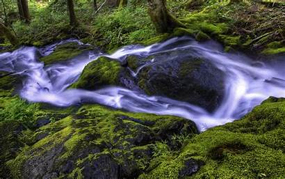 Stream Forest Bach Wald Wallpapers Nature Lese
