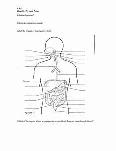 32 Label The Organs Of The Digestive System
