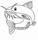 Coloring Catfish Fish Printable sketch template