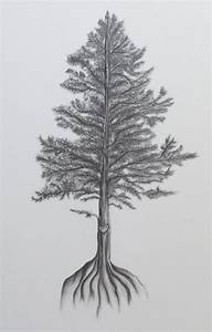 evergreen tree drawing | Karen L. Kintz | news