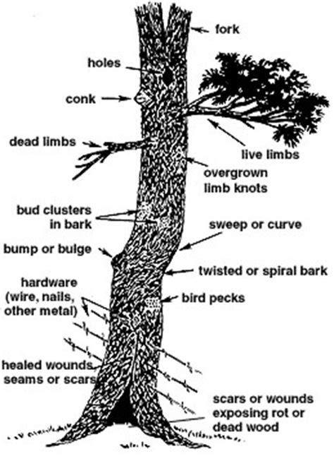 anatomy   tree florida school  woodwork