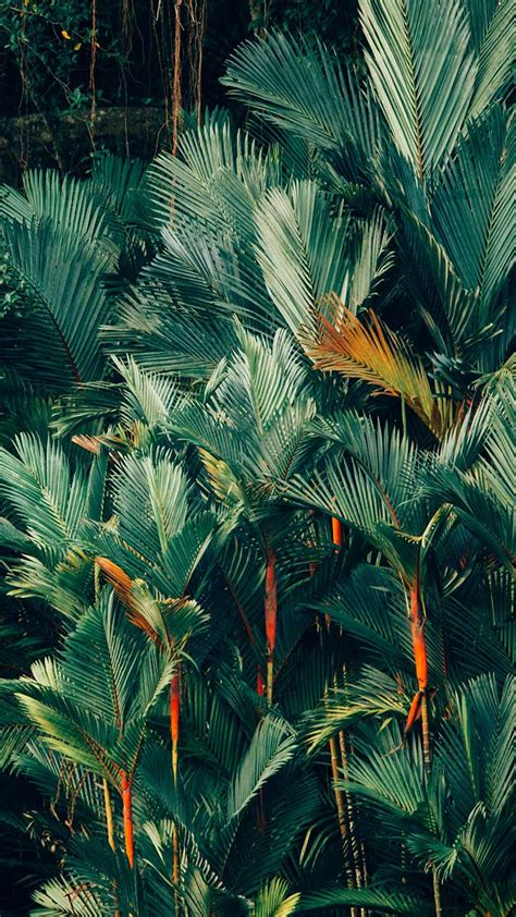 ✓ hd & 4k quality wallpapers ✓ free to related images: Welcome To The Jungle iPhone Xs Max Wallpapers | Preppy Wallpapers