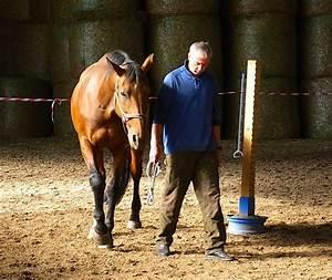 Wie Viel Ps Hat Ein Mensch : pferdegest tzte managementseminare funktionieren nur mit pferd ~ Orissabook.com Haus und Dekorationen