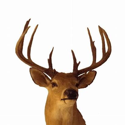 Deer Florida North Hunting Buck Range Finest