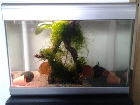 petit aquarium pour combattant plus grand bac pour mon combattant