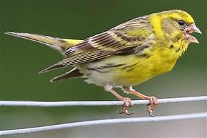 Kleine Vögel Im Garten : z hlaktion stunde der gartenv gel 2018 nabu ~ Lizthompson.info Haus und Dekorationen