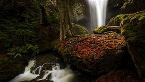 Forest, Waterfall, Between, Green, Covered, Rocks, 4k, Hd, Nature