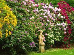 Schnell Wachsende Laubbäume Für Den Garten : die besten immergr nen str ucher f r den garten ~ Michelbontemps.com Haus und Dekorationen