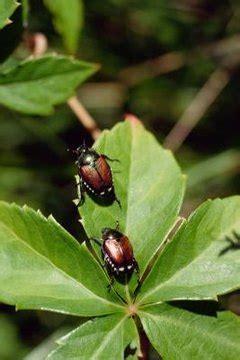 kind  beetle   grub worm turn  animals