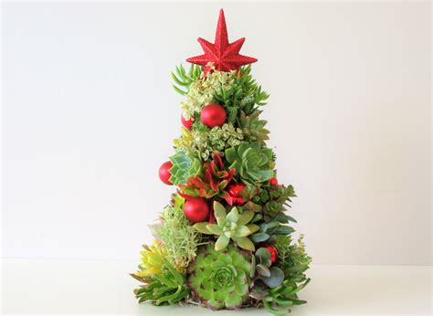 living succulent christmas tree perth succulent bowls