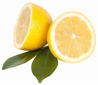 Lemon Transparent Citrus Clipart Leaf Fruit Fruits