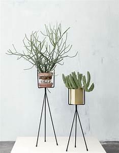 dans la deco il y a des cactus elle decoration With quelles sont les couleurs froides 13 quelles couleurs associer avec le vert elle decoration