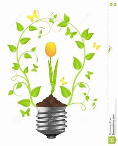 Bulb With Plant Of Tulip Stock Vector  Illustration Of