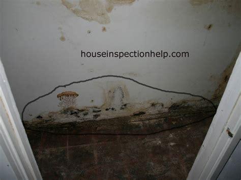 closet mold problems