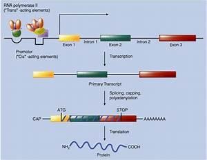 Pin On Genetics  U0026 Molecular Biology