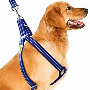 Dog Collars & Harnesses: CoolPets Dog Harness Leash Collar ...