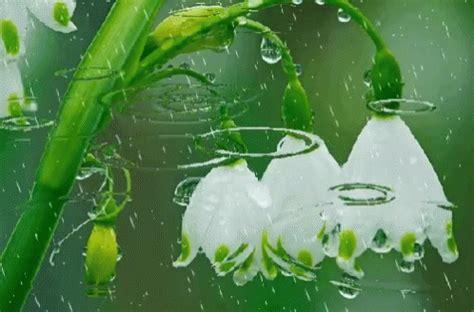 raindrops flower gif raindrops flower discover share