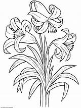 Coloring Flower Printable Lily Worksheets Rose Flowers K5 Colouring Sheets Flores Blogx K5worksheets Books Adult Spring Drawings Garden Trees Keena sketch template