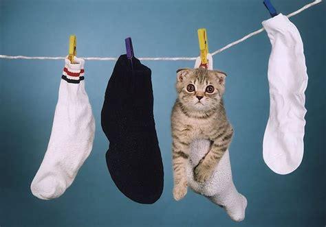 le chat dans une chaussette accroch 233 224 une corde 224 linge lol chat images photos et vid 233 os