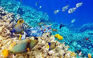 Wallpaper, Hd, Quality, Underwater, World, Ocean, Coral, Reef