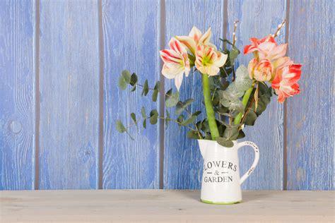amaryllis schnittblume anschneiden die amaryllis als schnittblume 187 so pflegen sie den ritterstern in der vase