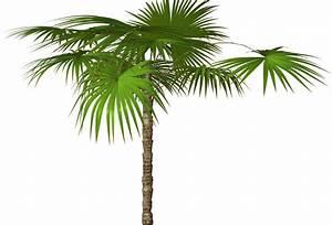 Cartoon Palm Tree | R11+-+Romi+Palms+%26+Trees+-+0013.png ...