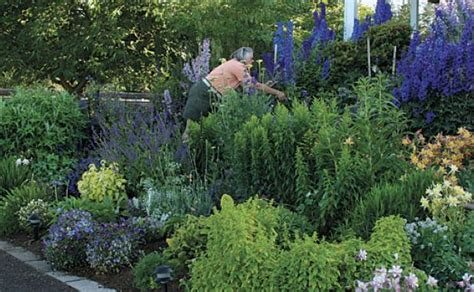 perennial garden plans zone 9 house design and