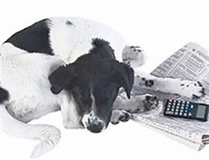 Pflegeleichte Haustiere Wohnung : mietrecht haustiere welche tiere darf ein mieter halten philognosie ~ Yasmunasinghe.com Haus und Dekorationen